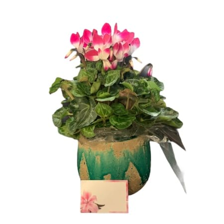 CYCLAMEN IN CERAMIC
